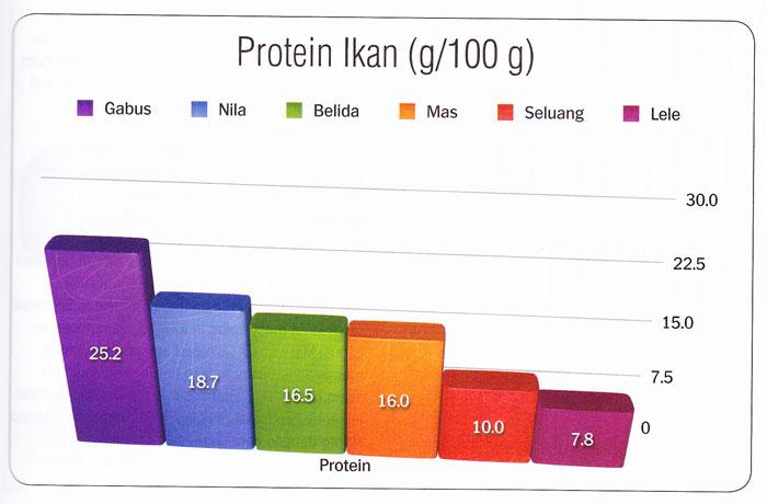 protein-albumin-ikan-gabus-pujimin