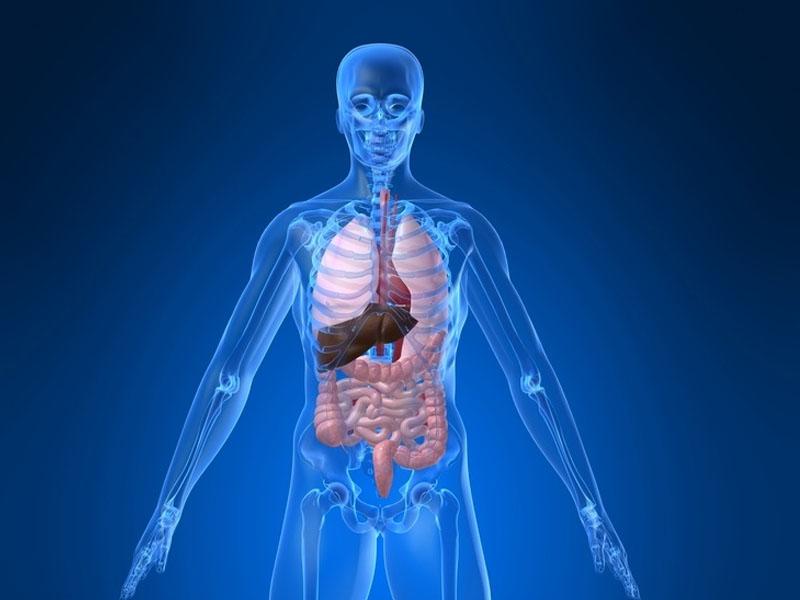 Sistem Pencernaan Makanan Fungsi Lemak Protein Enzim Kelenjar Ludah