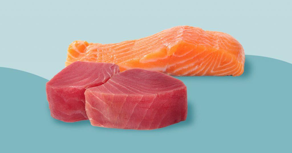 Tuna vs Salmon: Manakah Yang Lebih Baik?