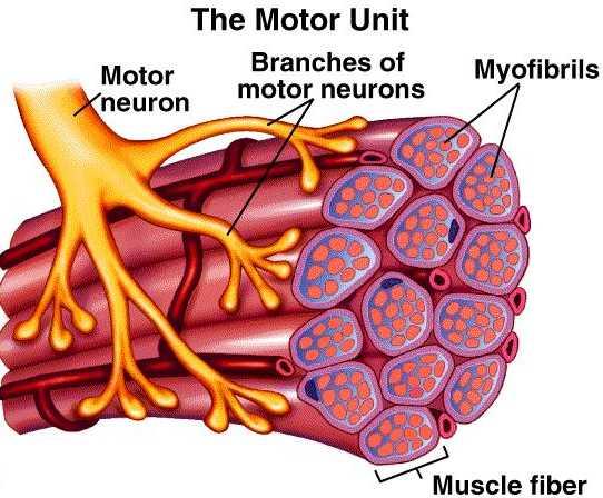 Motor-Unit-lg